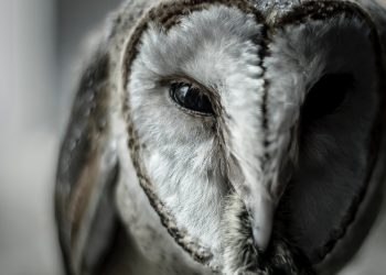 animal-animal-photography-avian-1454825